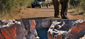 Special Day Tour Group Offers for our Mpumalanga locals!!!