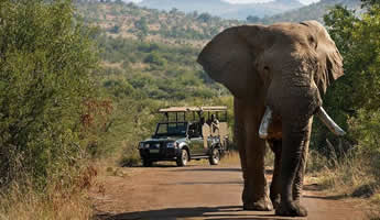 Kruger Safari Tour from Maputo
