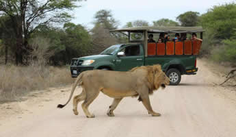 Kruger Safari Tours from Johannesburg